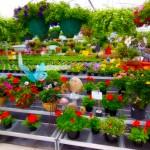 Bonnie Brooke Gardens, Door County Green House, Door County Nursery, Garden Center,Wisconsin,Sturgeon Bay,plants,flowers,garden accessories,all things plants