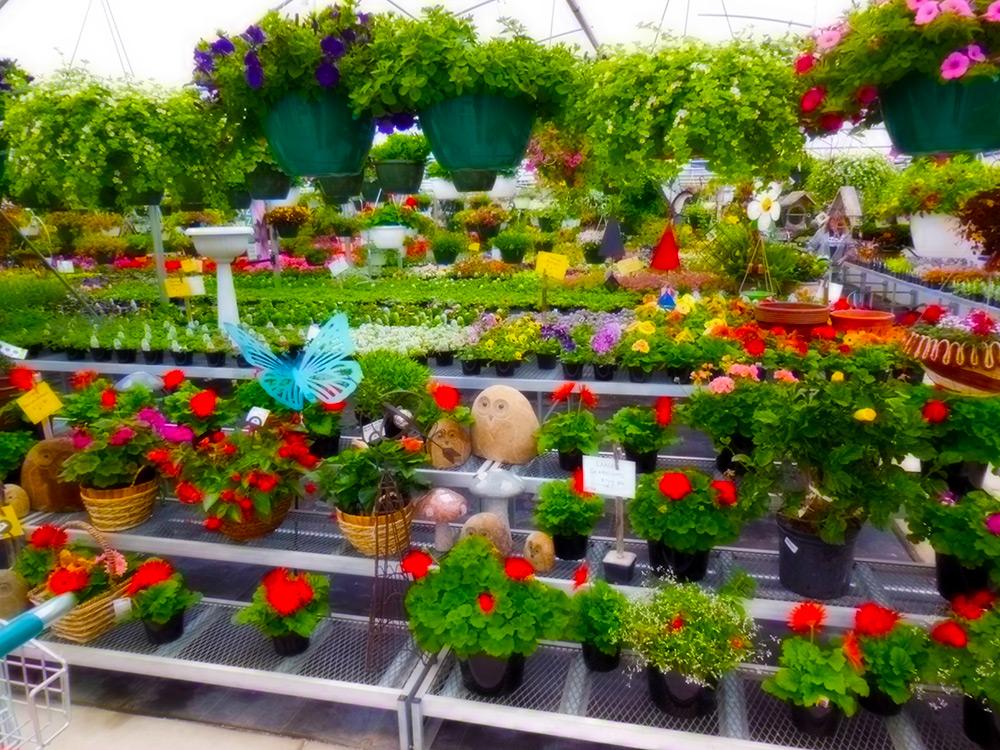 Nursery Garden Plants Thenurseries