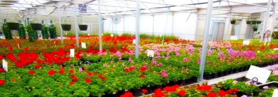 Bonnie Brooke Gardens, Greenhouses in Door county Wisconsin